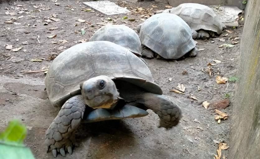 Kura-kura Emys di Kampung Satwa. Foto oleh Hammam/Mojok.co