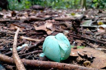 Pecahan telur di area Arboretum UGM
