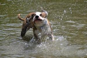 dog-49834_1280