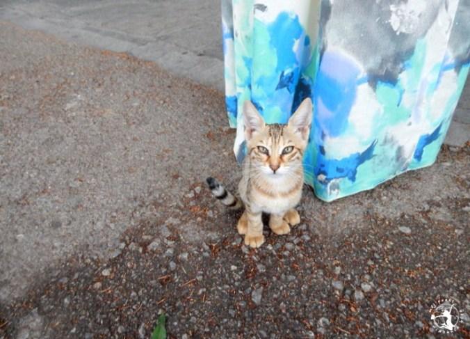 Mój Punkt Widzenia Blog - Kot w Grecji