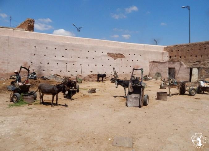 Mój Punkt Widzenia Blog - osły odpoczywające na targowisku w Marrakeszu