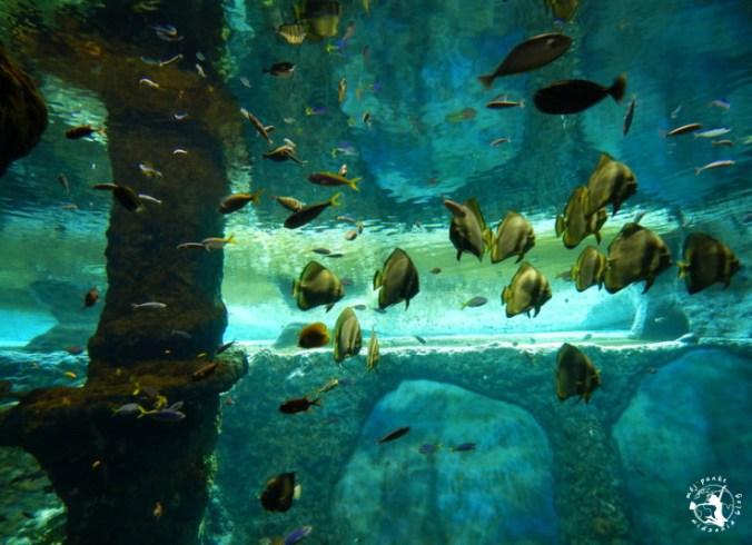 Mój Punkt Widzenia Blog - Afrykarium we wrocławskim zoo