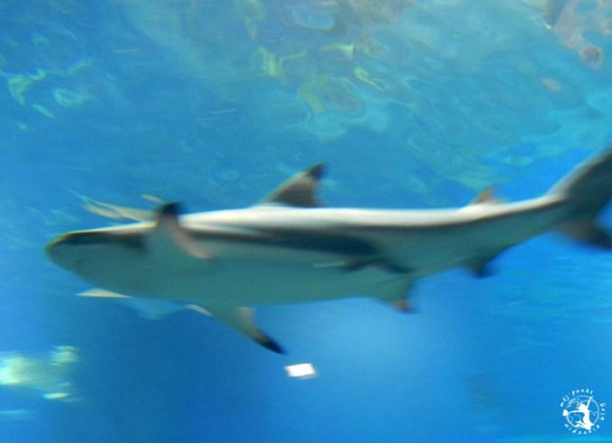 Mój Punkt Widzenia Blog - groźne rekiny w Afrykarium