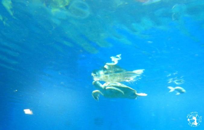 Mój Punkt Widzenia Blog - żółwie pływajęce w akwarium, Afrykarium