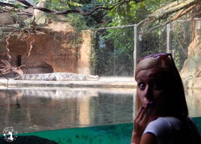 Mój Punkt Widzenia Blog - krokodyl we wrocławskim, Afrykarium