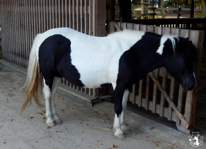 Mój Punkt Widzenia Blog - konie w stajni we wrocławskim zoo