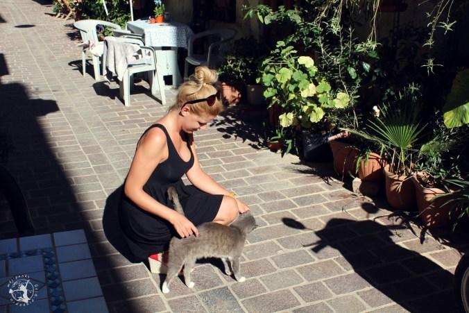 Mój Punkt Widzenia Blog - Spacer po Chani i napotkany, grecki kotek