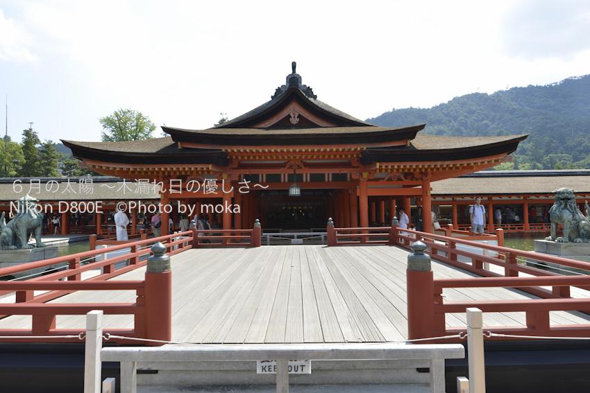 20120918_miyajima27