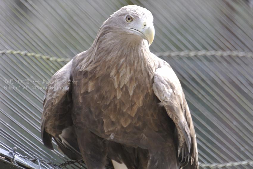[6]鷹の目、獲物を逃すことなく捕らえるハンターの目!