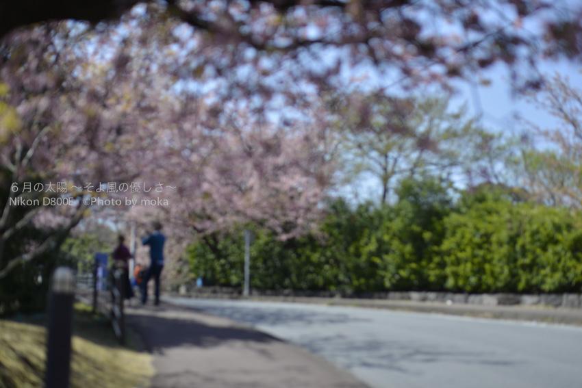 20140324-25_izu-toi12.0