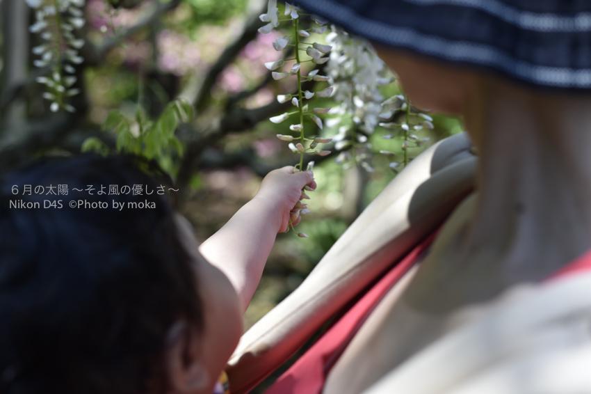 20140502_ashikaga131