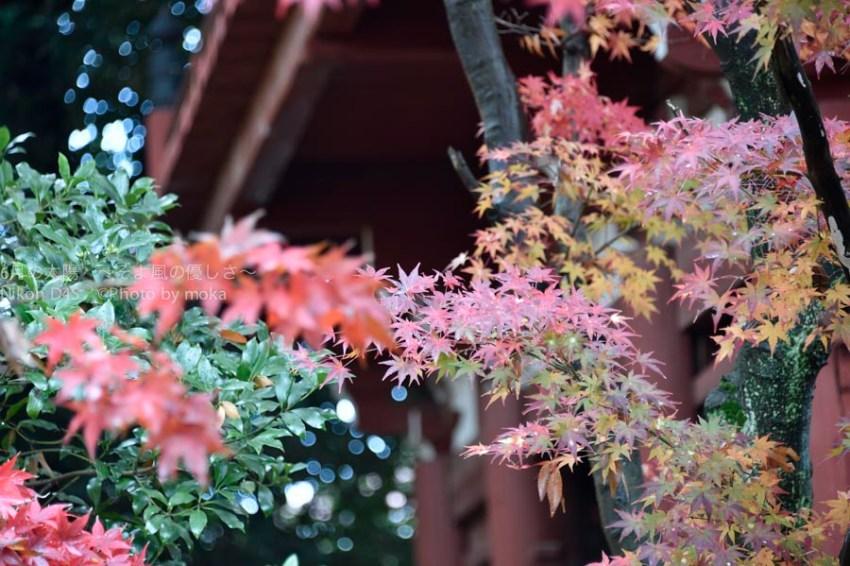 20141130_hondoji002
