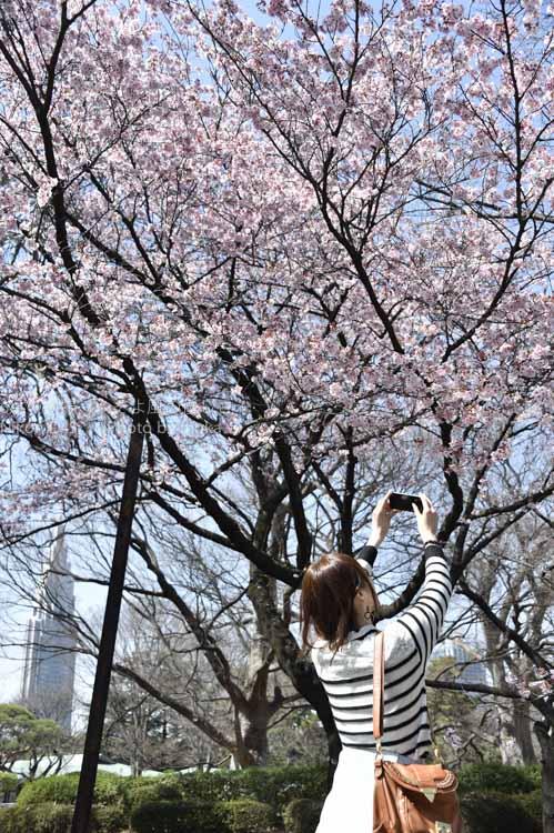 [6]春を切り撮る