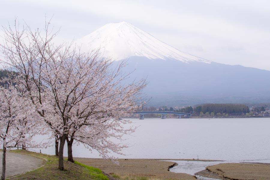 [6]2016年に撮りたい桜の写真