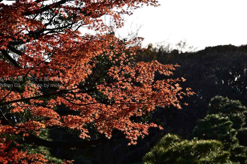 [6]六義園の大名庭園の紅葉