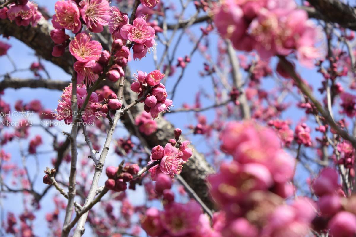 [6]春の足音を全身で感じた日曜日!!