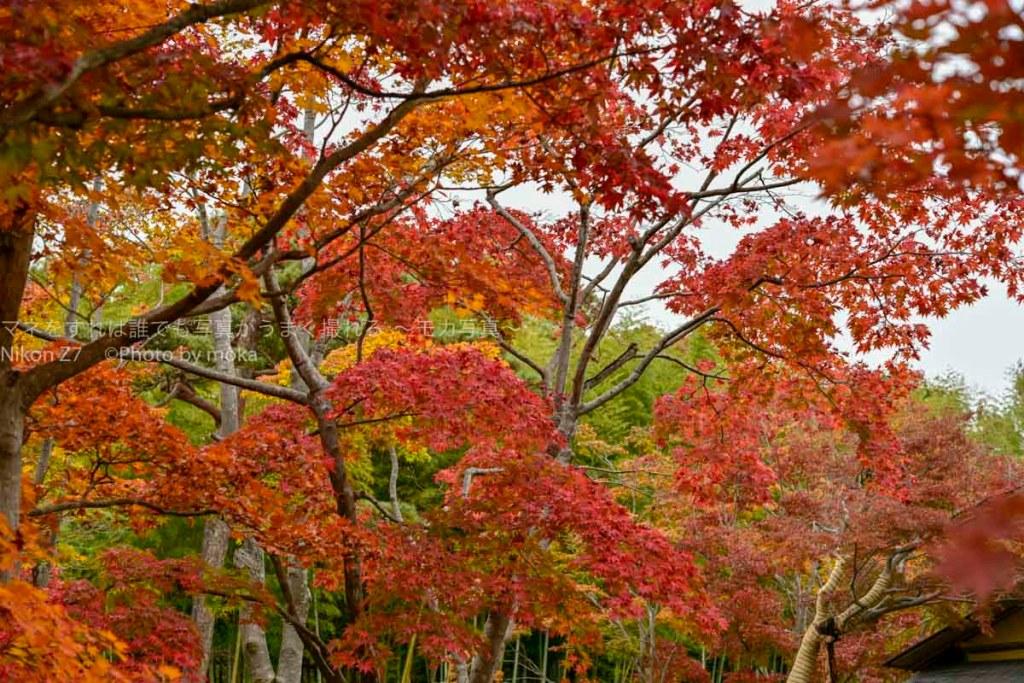 [6]見事に色づいた昭和記念公園の日本庭園