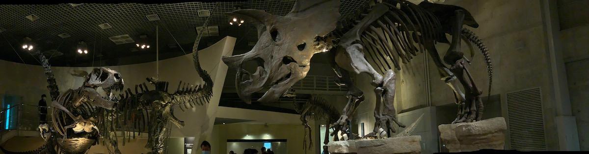 [6]ティラノサウルスとトリケラトプスが臨戦態勢