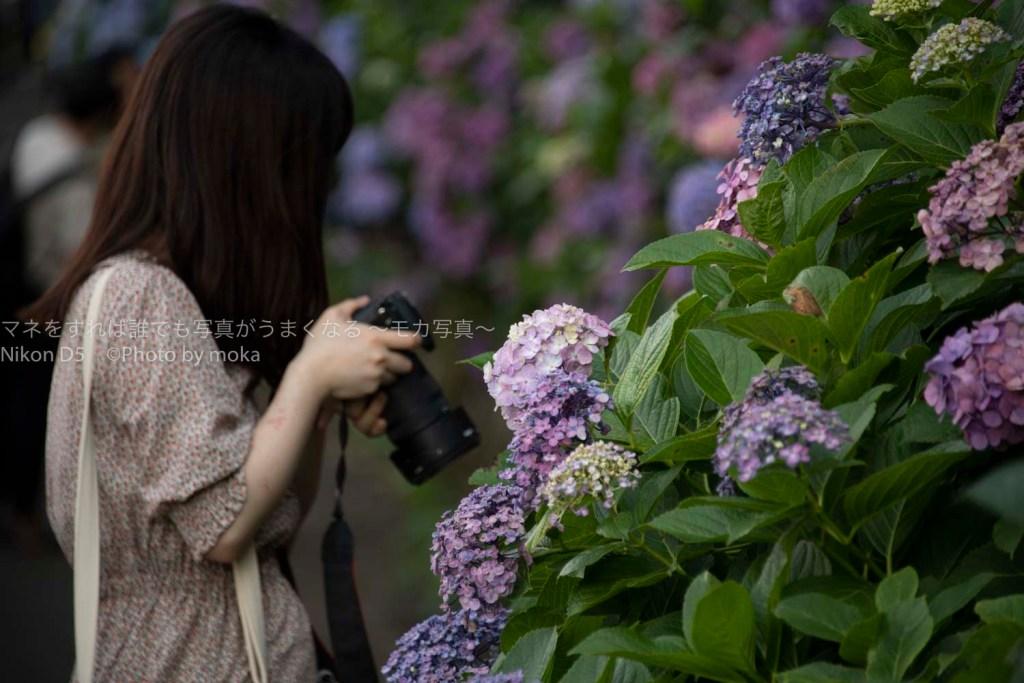 【東京の紫陽花の名所】王子、飛鳥山公園で紫陽花の写真を撮ろう