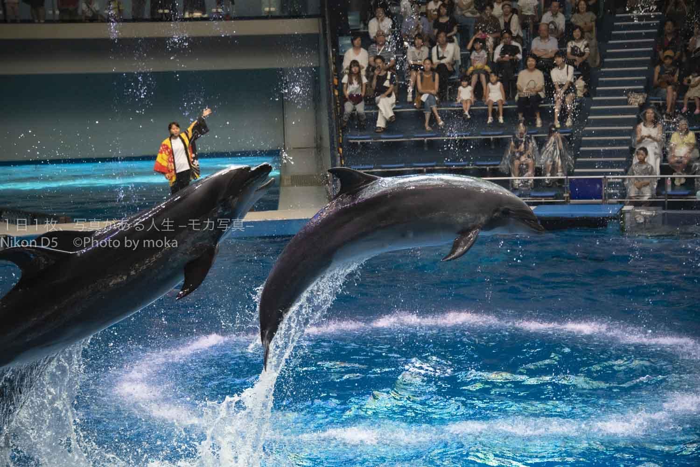 【アクアパーク品川のイルカショー】ジャンプするイルカの写真を撮ろう