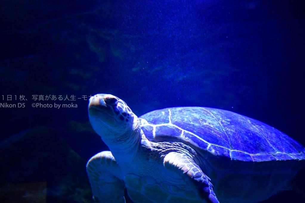 【水族館写真】水族館の写真をかっこ良く撮る4つの設定