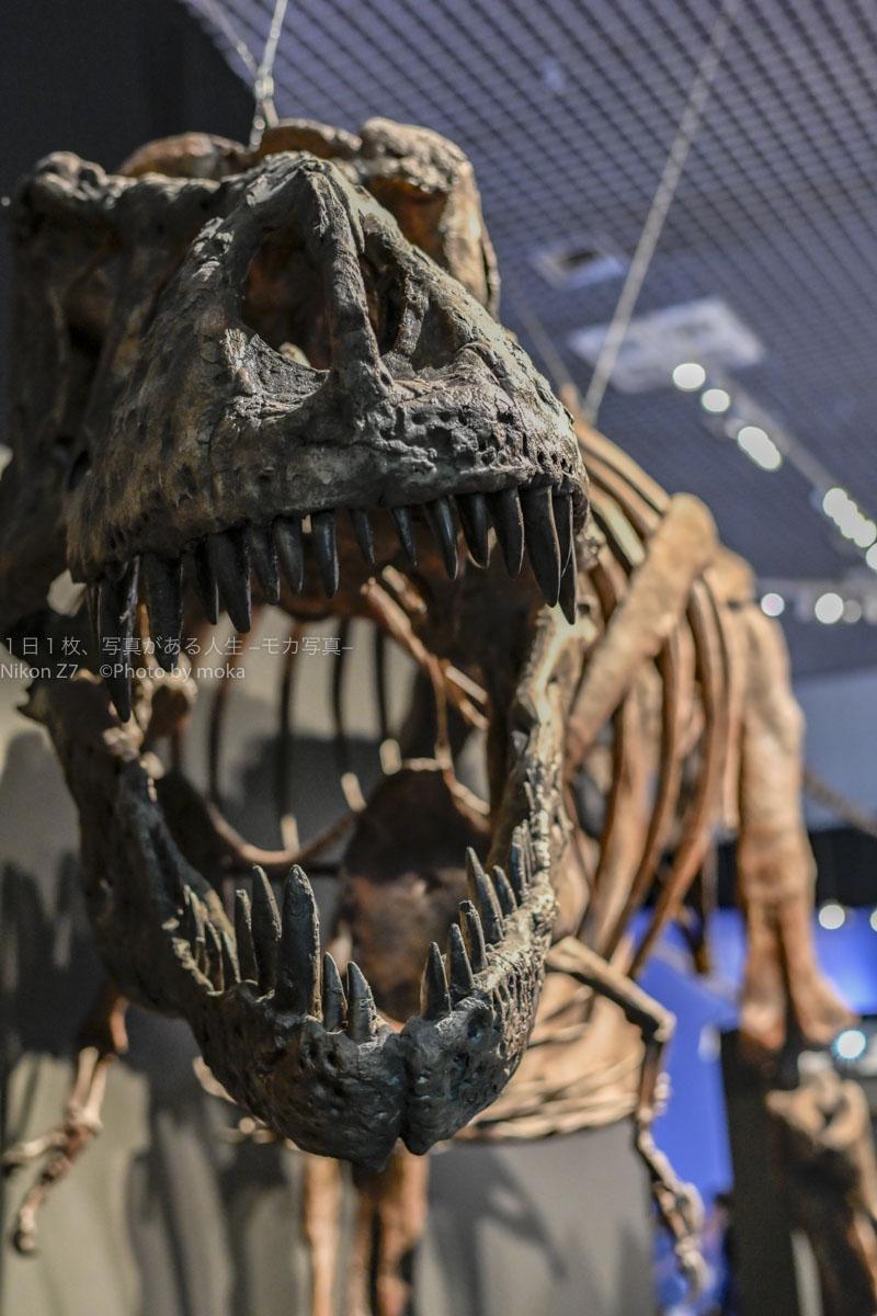 【大人気の恐竜が目の前】国立科学博物館で開催中の恐竜博!!