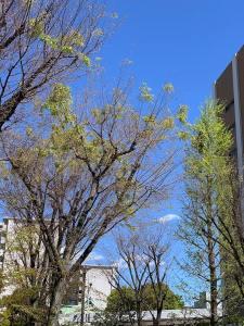 カメラを持って家の近所で空を見上げて見た