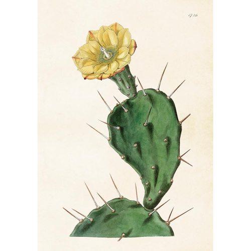 Kaktus, vintage-tyylinen juliste 50x70