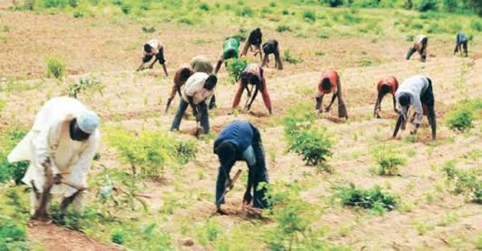 Nigerian Youths farming