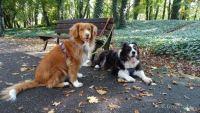 psy w parku