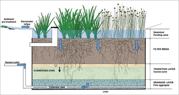 En este momento estás viendo ¿Qué hacen las plantas en un biofiltro?