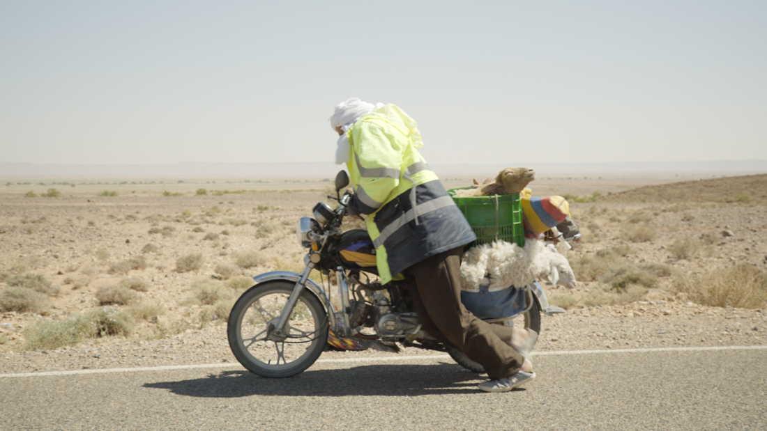 Het wonder van Le Petit Prince - schapen-transport