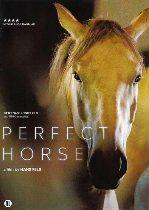 dvd perfect horse hans fels