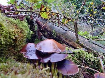 herfst_paddenstoelen