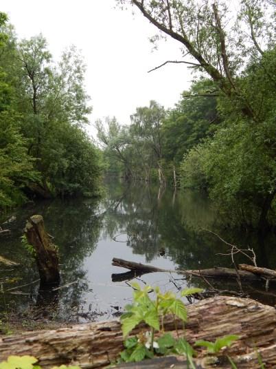 nationaal_park_zuid-kennemerland-DSCN7313