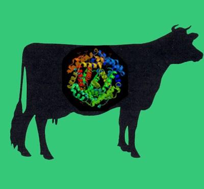 Biotinylated Thrombin