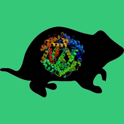 Hamster Fibronectin