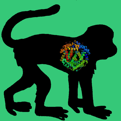 Cyno Monkey PAI-1 (wild type active fraction)