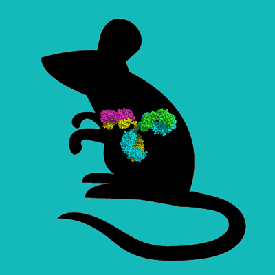 Balb C Mouse IgG, Protein A Purified