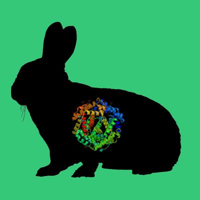 Active Rabbit Urokinase