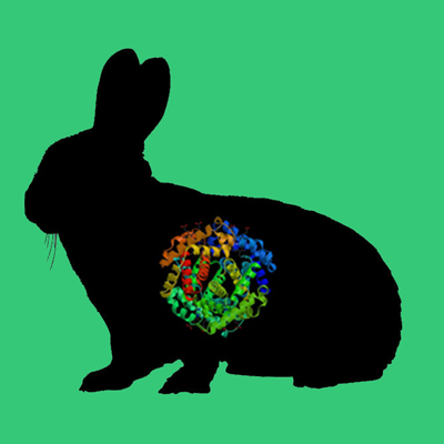 Rabbit plasminogen