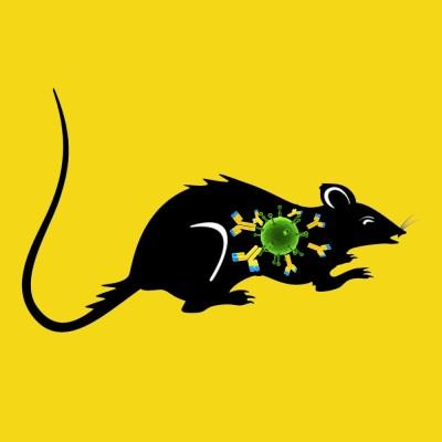 Rabbit anti rat PAI-1, affinity purified