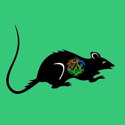 Rat Prolactin Receptor