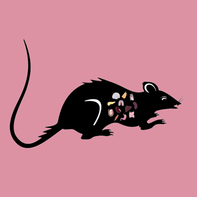 Rat Brain Lyophilized Powder