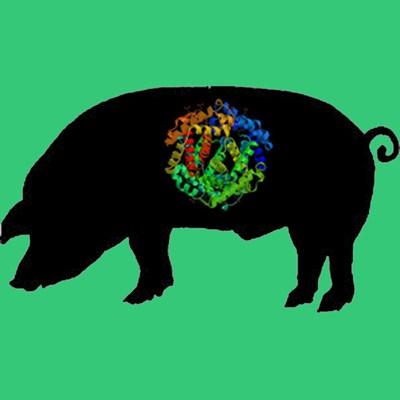 Porcine Prothrombin