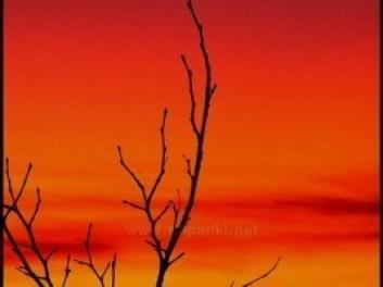Закаты алые - Волшебники двора