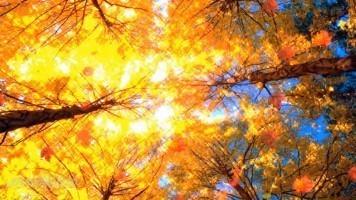 Детский клип - Осень постучалась