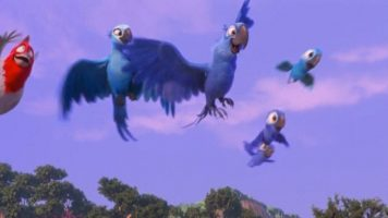 Текст песни - Пара попугаев