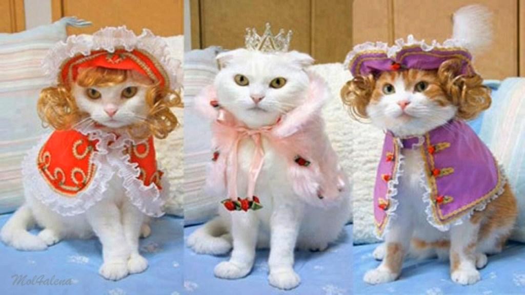 Веселая подборка котов на выставке - слайдшоу