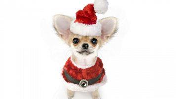 Новогодние песни 2018 – С годом Собаки